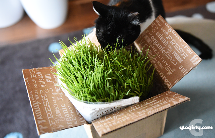 Katie poking her head into a box of cat grass