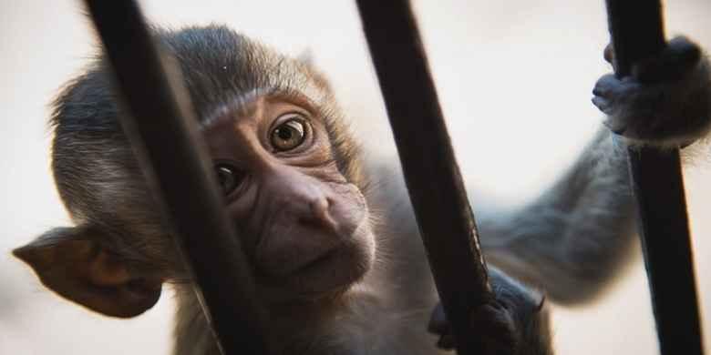 7 Hewan ini Masuk Penjara Karena Ganggu Manusia
