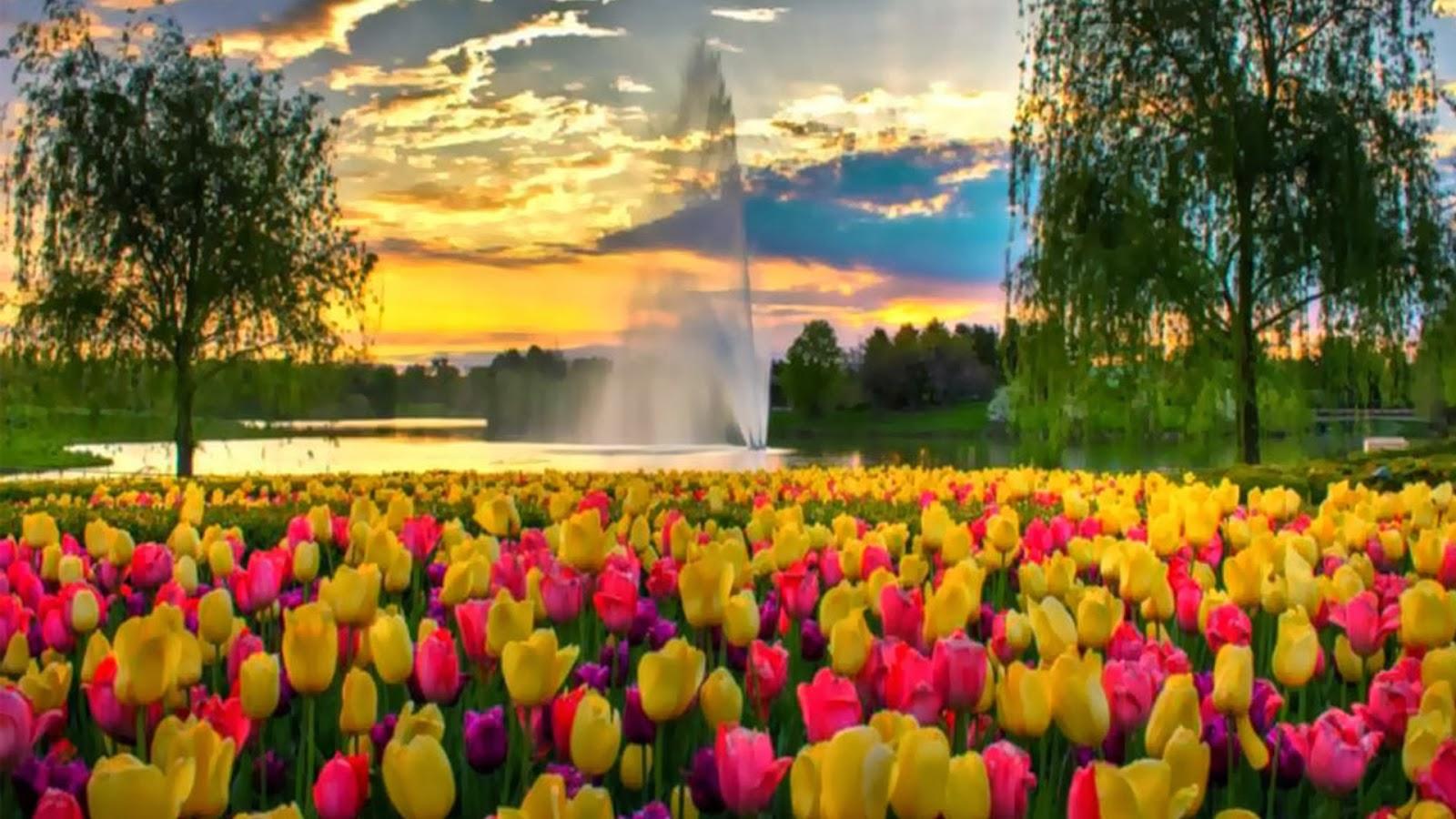 جمال الزهور اليابانية اليابان