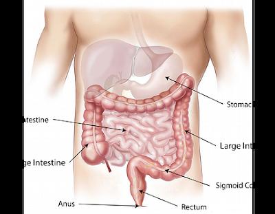 www.healthnote25.com,manfaat-biji-rami-bagi-kesehatan