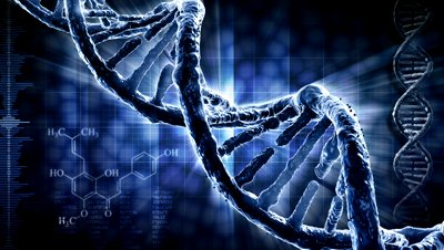 Rhesus Negative and DNA Correlations : The Reason Why Rhesus