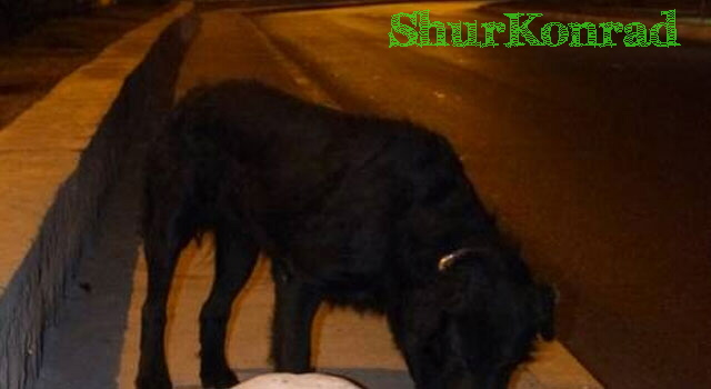 perro-no-abandona-perro ShurKonrad dog love puppy dead fiel amigo 3