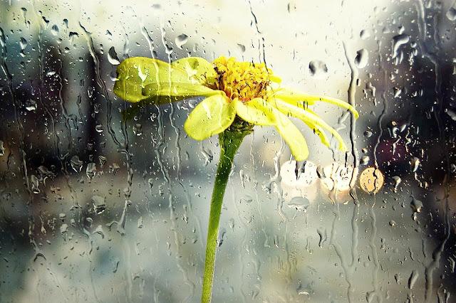 Elegi Hujan dalam Syukur Senja