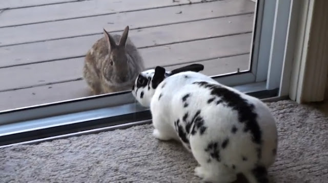 Wild Rabbit Spots A Beautiful Pet Bunny And Falls Madly In Love