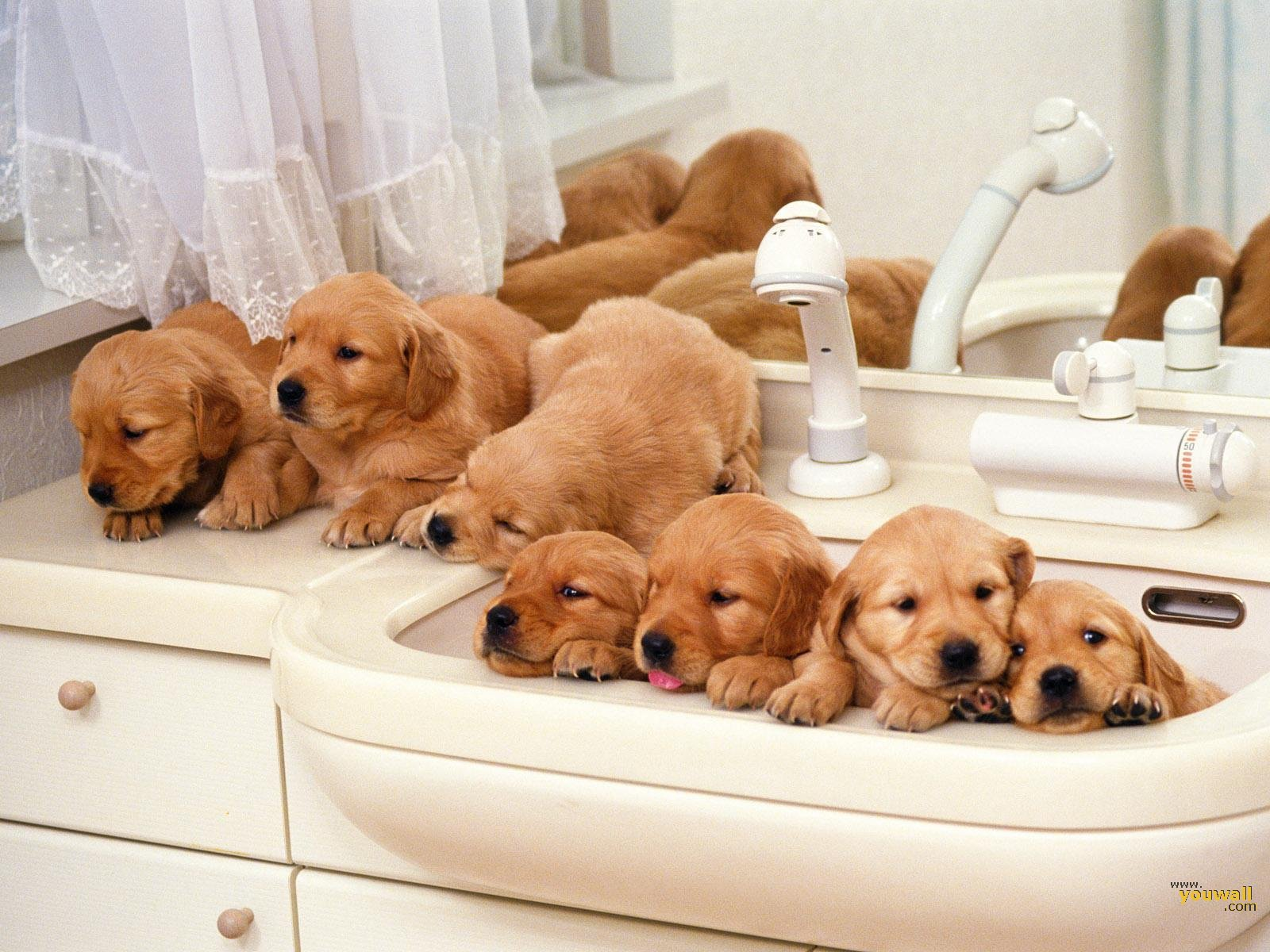 Cute Puppies Family Wallpaper