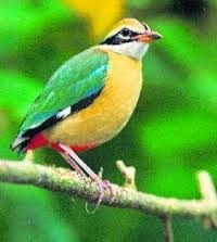 Rare bird spotted after 60 Years