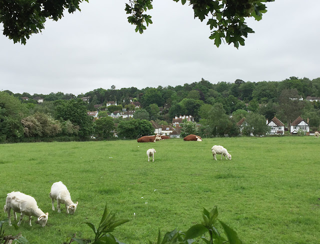 View over fields to Coney Hall.  2 June 2016.