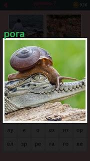 на голове крокодила устроилась улитка  с усами как рога
