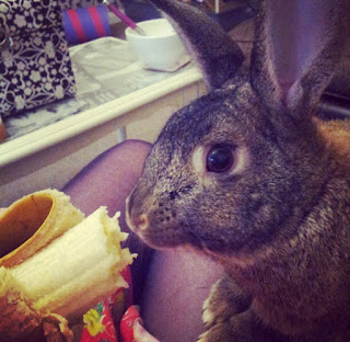 House rabbit, bunny, pet loss, memories, grieving for loss of pet, banana, lifestyle blog, lbloggers
