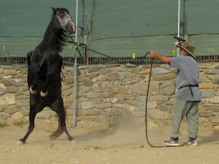 6946665014 Steve Vergis- horse trainer