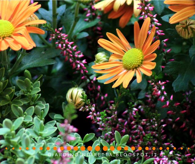 nuovi fiori per l'autunno - un giardino in diretta