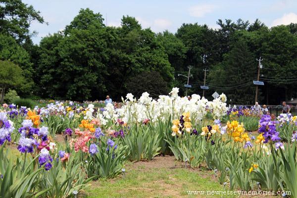 Iris Gardens