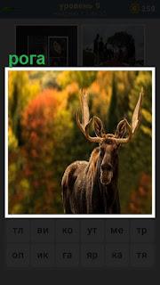 в лесу стоит олень с большими рогами на голове