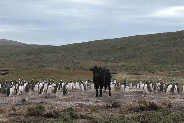The fauna in the Antarctica is threatened by pathogens humans spread in polar latitudes