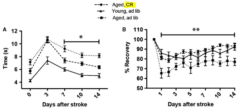 図:高齢ネズミのカロリー制限と脳梗塞体積