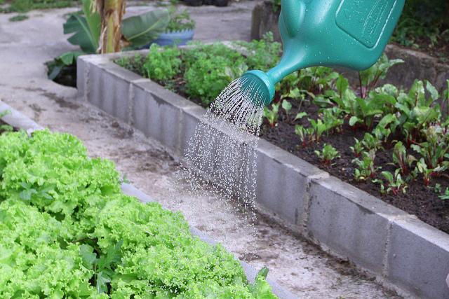 Pessoa regando uma horta