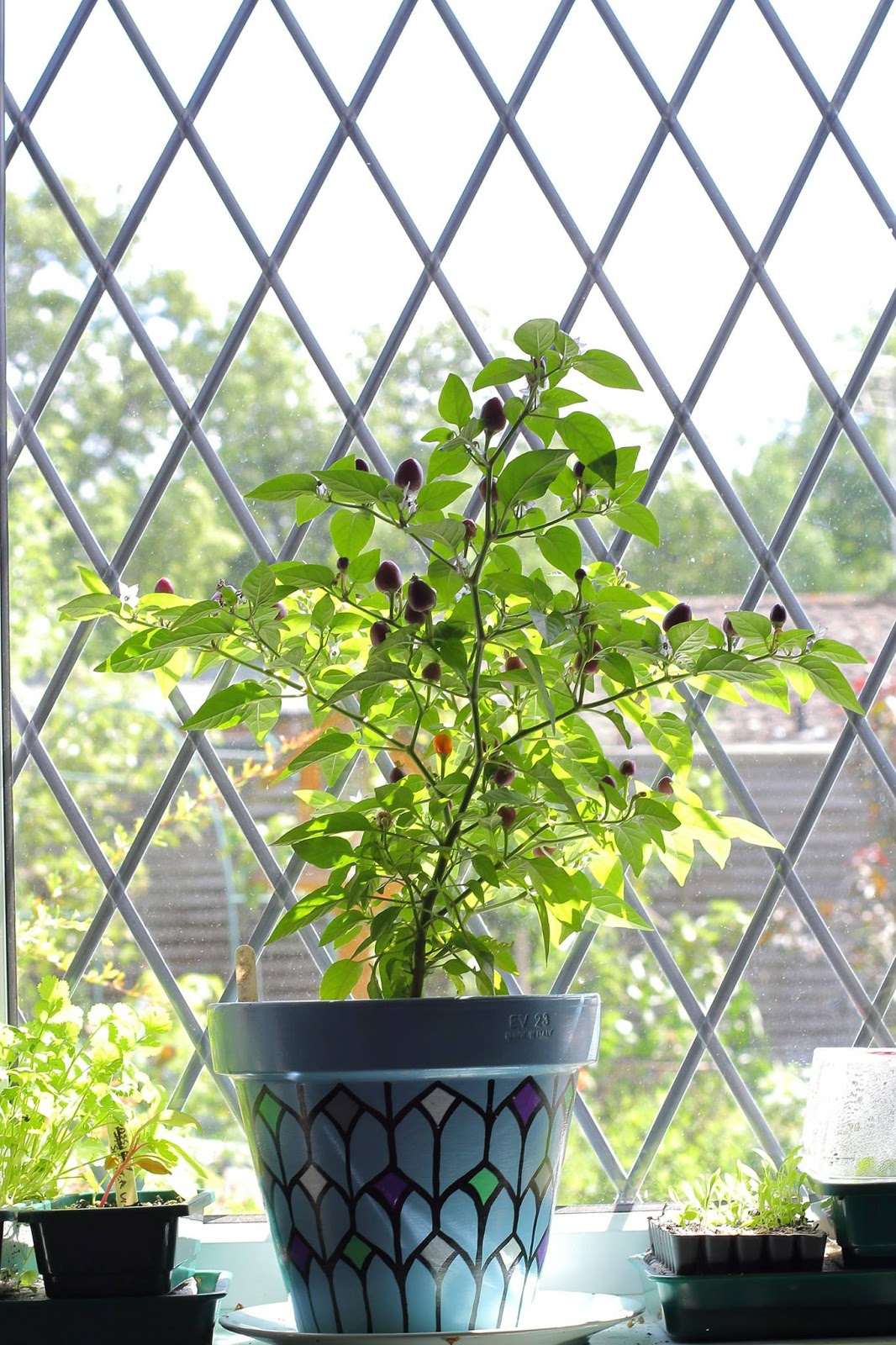 Tomato variety Goldfish who planted, photo, reviews and description