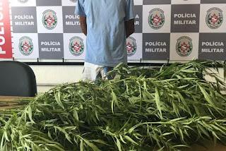 Homem é preso acusado de cultivar maconha no quintal de casa