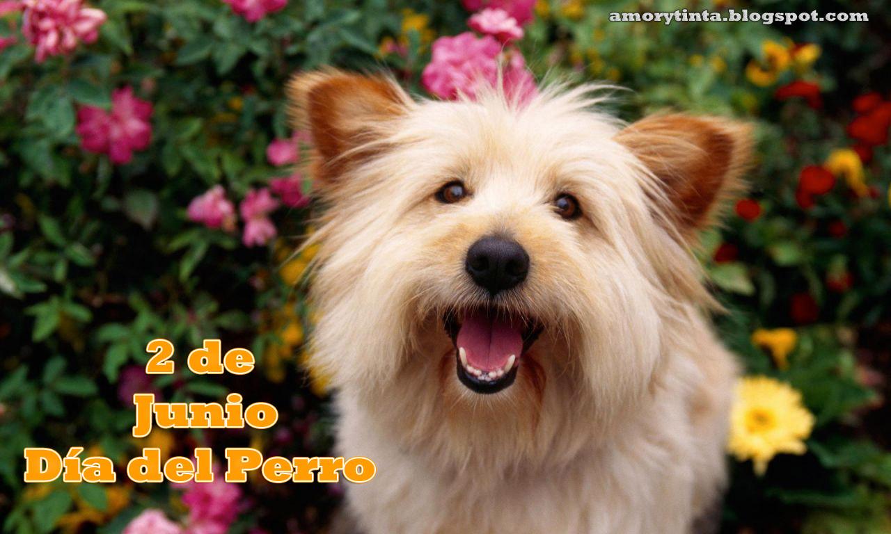 Dia Del Perro With Images Tweets Karencitafc Storify