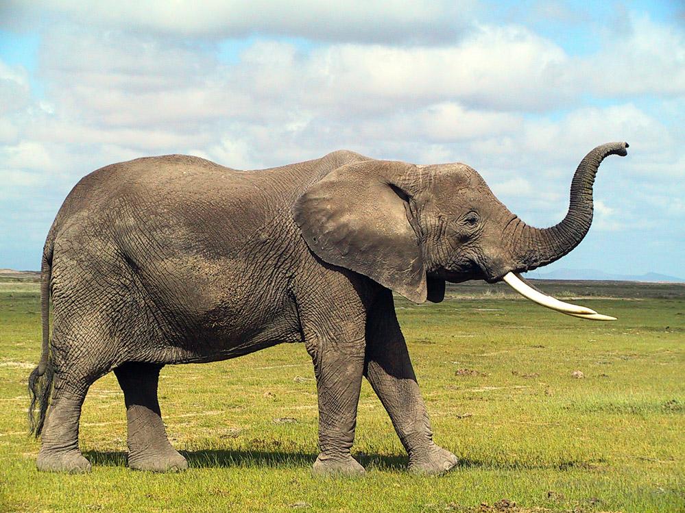 Seite Mit Dem Elefanten