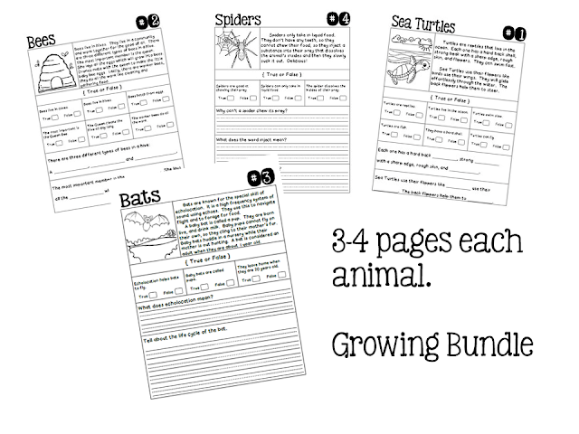 The Paper Maid: Animal Comprehension Test Time Bundle