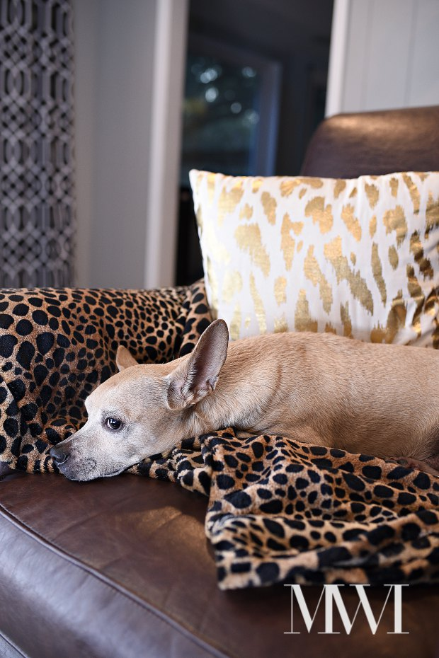 Pets are part of the family, too. Protect your furniture, and enhance their comfort, with throw blankets and pillows.