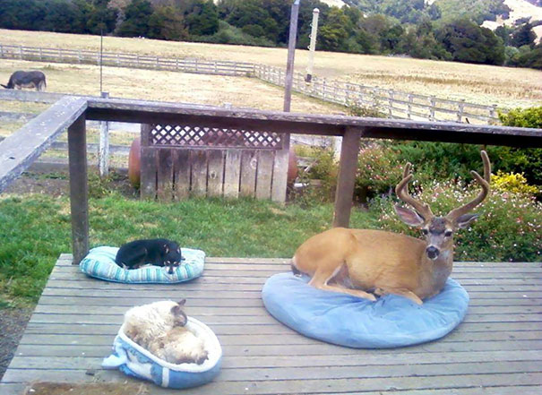 40 Heartwarming Pictures Of Animals - Oh Deer...