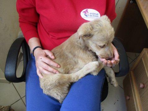 κακοποίηση σκύλων κακοποίηση αδέσποτων