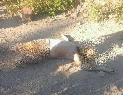 Corpo de homem em decomposição é encontrado em Chapadinha