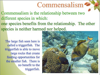 commensal relationship definition of cheating