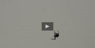 http://www.wimp.com/spider-invasion/