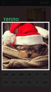 собака лежит на пледе под красной шапочкой. ей тепло
