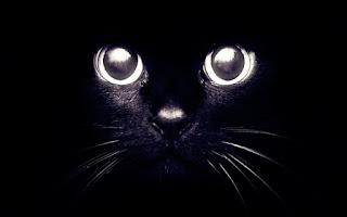 A crônica do menino que confundiu um gato como rato dentro de um mercado.