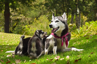 Consider All Factors:  Choosing the Family Dog