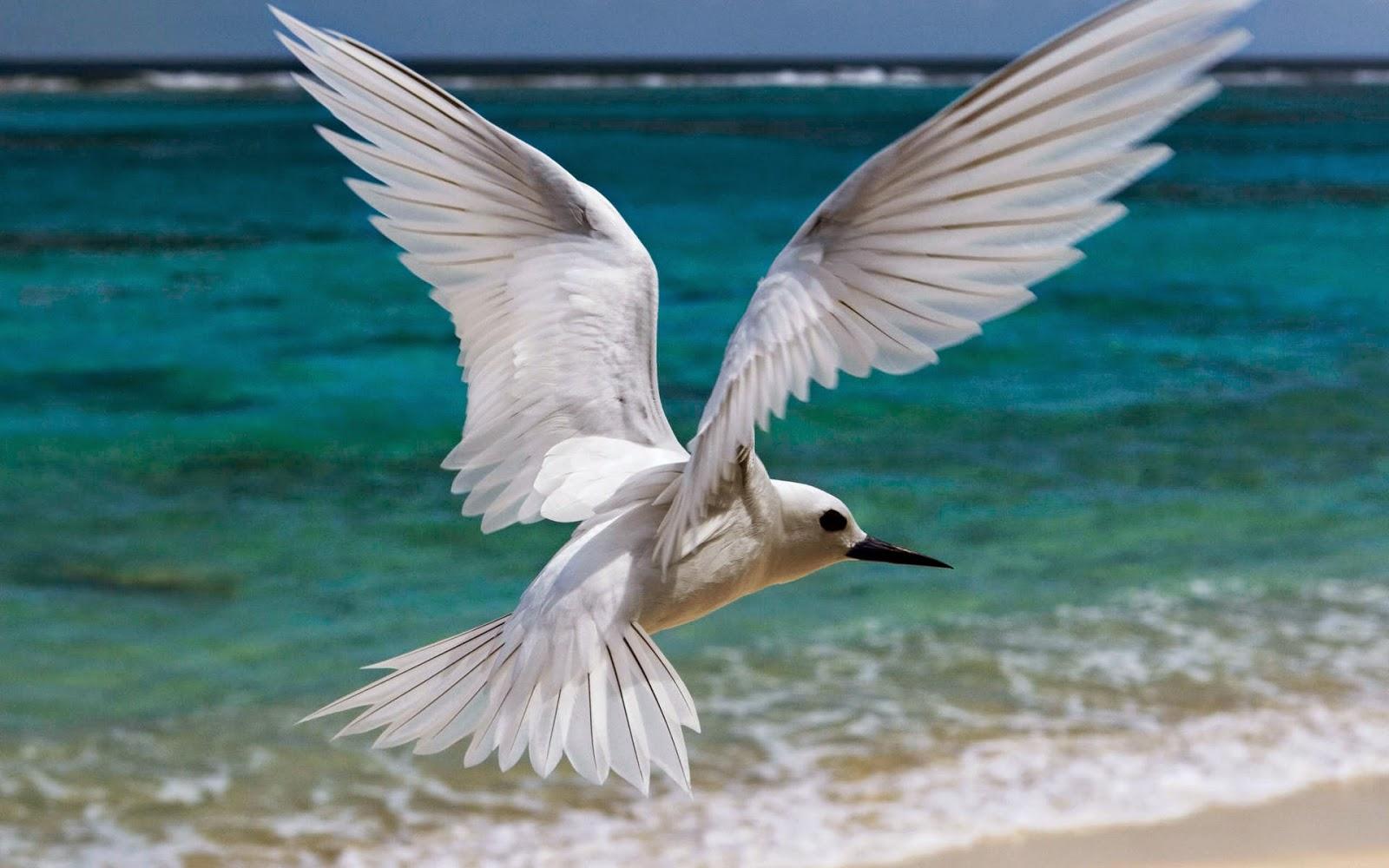 Beautiful And Dangerous Animals Birds Hd Wallpapers