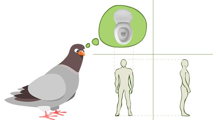 Vistas de un humano según una paloma ingeniera