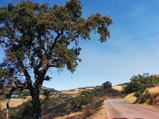 Charred tree and roadway stained pink with fire retardant, Mt. Hamilton Road, San Jose, California