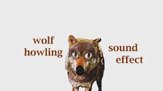 animal wolf sounds