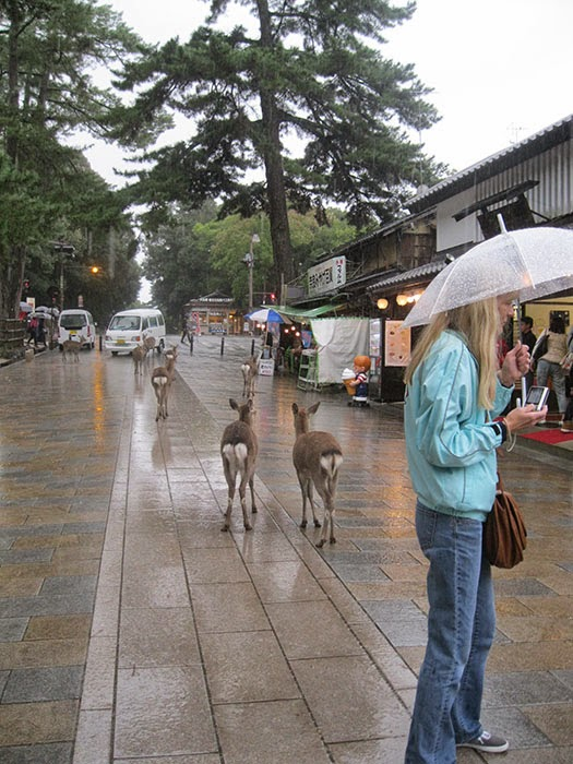 Visiting Nara in the Rain.