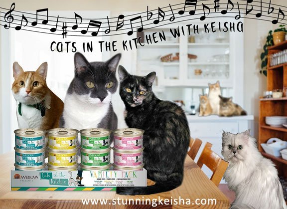 Cats in the Kitchen With Keisha