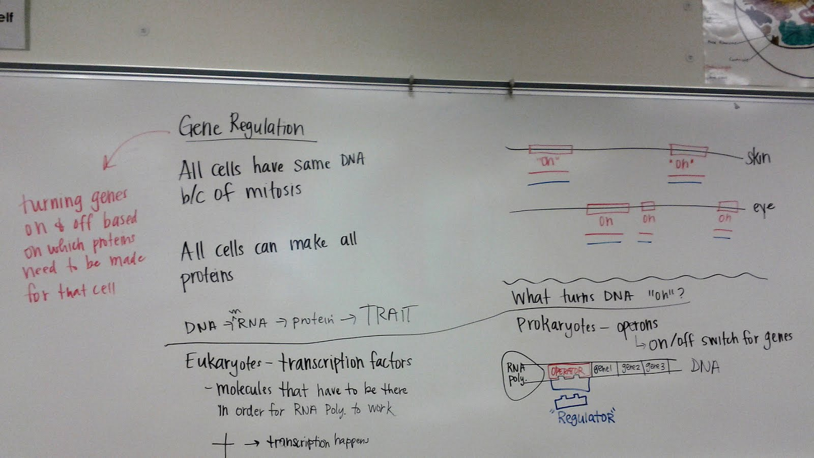 Dna Rna Protein Synthesis And Mutation Worksheet