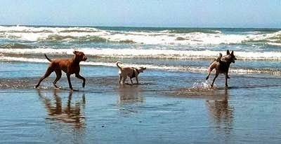 Vader and friends on Ft Funston beach