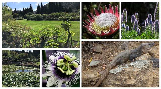 El mayor jardín botánico de España con especies únicas en el mundo está en Las Palmas de Gran Canaria