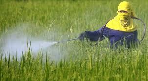 Pemilihan Pestisida Yang Benar dan Efektif