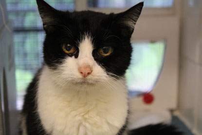 Older cat Squish from Cats Protection's Birmingham Adoption Centre