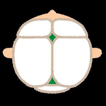 大泉門と小泉門のイラスト(上から)