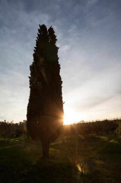 Agriturismo il Giglio a Massama