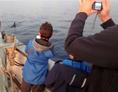 Pescaturismo Mallorca excursiones para avistar delfines