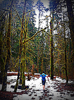 elwha trail run