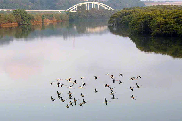 birds, mangroves, Okinawa, reflections, river, Okukubi, Kin-Town